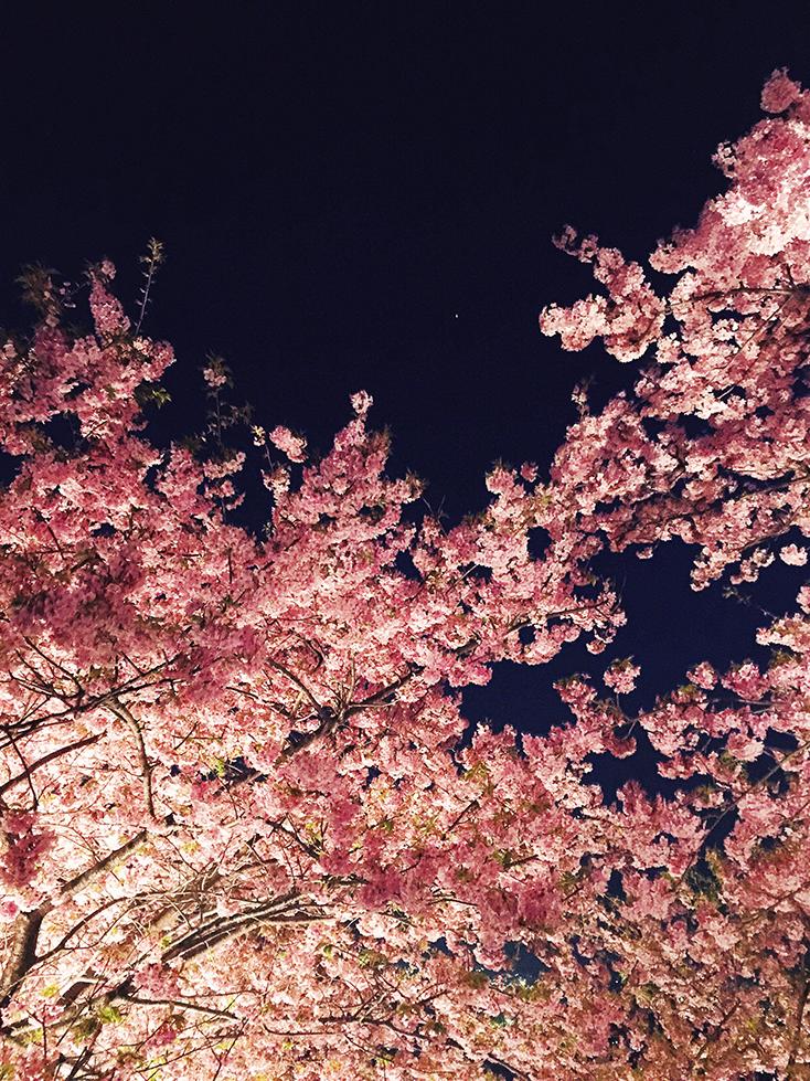 spring04